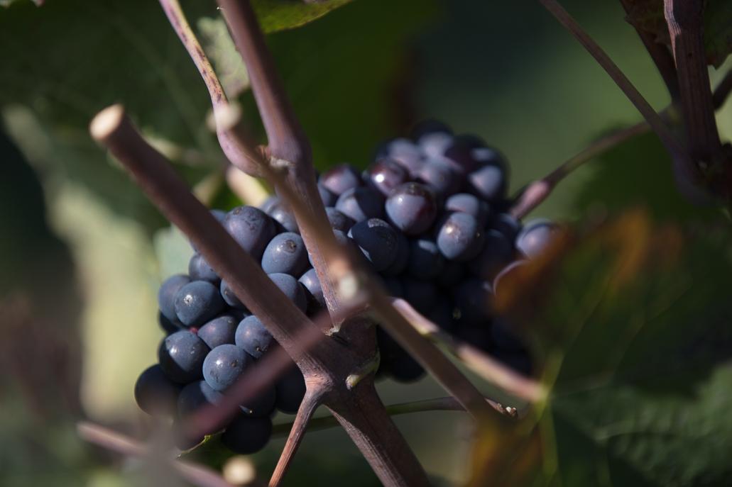 Sélection des Vins Vaudois 2018